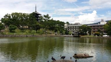 Turtle Pond!