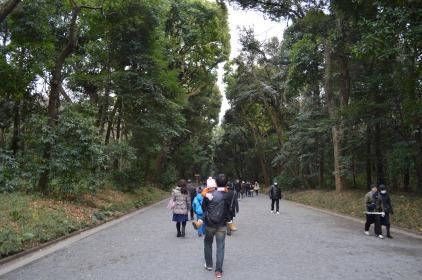 Forests of Meiji Jingu