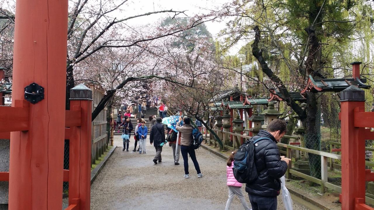 It Is Finally Cherry Blossom Season InJapan!